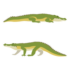 Vector illustration of lying and walking crocodiles isolated on white background