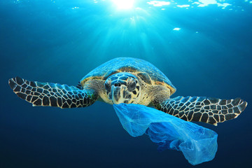 Photo sur Aluminium Tortue Plastic pollution in ocean environmental problem. Turtles can eat plastic bags mistaking them for jellyfish