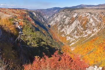 Mountain landscape scene in remote canyon Susica at Montenegro