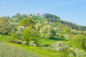 Blühende Landschaft im Frühling