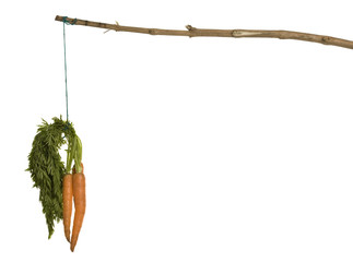 Carrot on a stick, a motivation concept on white.