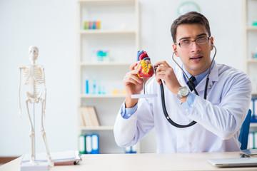Doctor explaining the heart model
