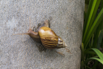 A snail is walking slowly