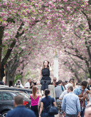 Woman gets her picture taken at the so-called Cherry Blossom Avenue in Bonn