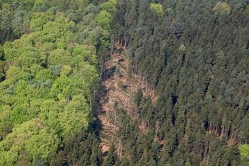 Luftbild eines Sturmschadens im Wald