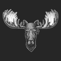 Moose, elk Cool pirate, seaman, seawolf, sailor, biker animal for tattoo, t-shirt, emblem, badge, logo, patch. Image with motorcycle bandana