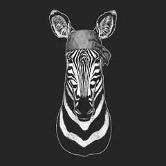 Zebra Horse Cool pirate, seaman, seawolf, sailor, biker animal for tattoo, t-shirt, emblem, badge, logo, patch. Image with motorcycle bandana