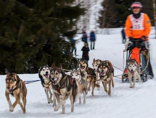 Schlittenhunde Rennen im kalten Winter, Husky_008