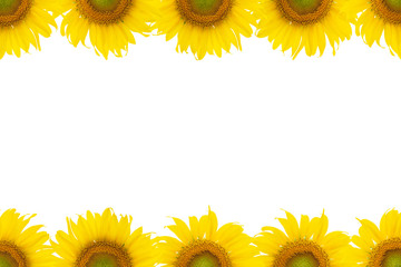 Sunflowers pattern in top and bottom frame on white background