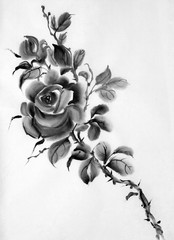 monochrome rose flower