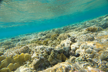 underwater landscape of the red sea
