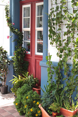 house facade beautiful decorated with plants