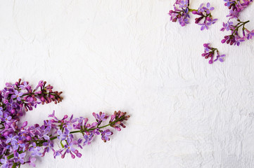 Wall Murals Lilac Lilac flowers arrangement on white background
