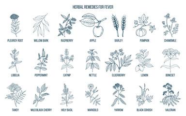 Best medicinal herbs for fever