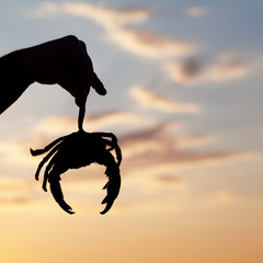 Silhouette of hand with caught crab and sunset sky