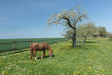 Pferd grast