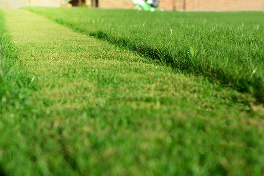 mowing the lawn. A perspective of green grass cut strip