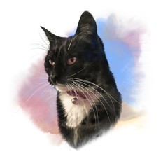 Cute black cat with white breast and mustache. Portrait of pet. Realistic drawing of a cat on watercolor background. Good for print T-shirt. Hand painted illustration. Watercolor animal art collection