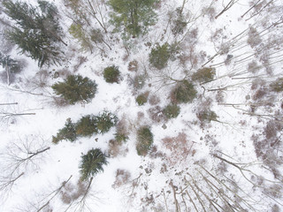 Trees in Winter from a Drone