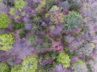 Fall Foliage from a Drone