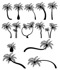 Set tropical palm trees with leaves, mature and young plants. Black silhouettes isolated on white background. Vector. Palm icon