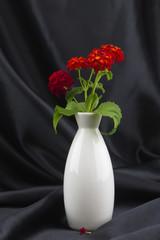 Desert lantana in white vase against black background