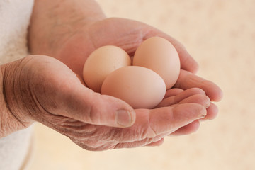 Chicken eggs in the hands