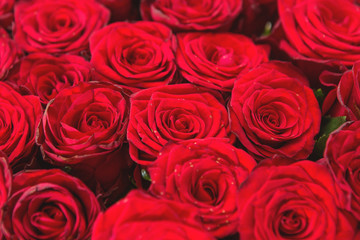 A bouquet of red roses closeup