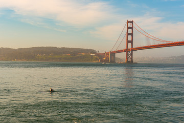 Woman rowing a sculling boat by the bridge
