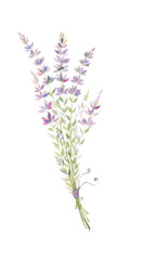 watercolor illustration of a sprig of lavender, a bouquet of purple flowers.