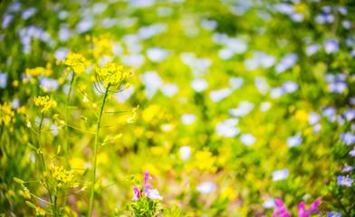 春の野原のイメージ