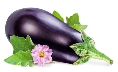 Aubergine or eggplant with aubergine flower and leaves on white background.