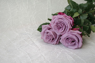 roses of gray, lilac, varietal
