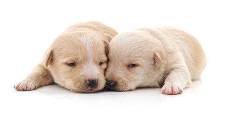 Two cute puppies.