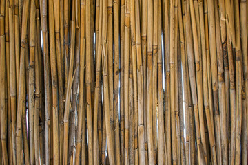 background of reeds