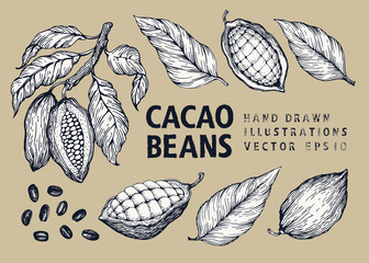 Cocoa beans vector illustration set. Engraved vintage style illustration. Chocolate cocoa beans.
