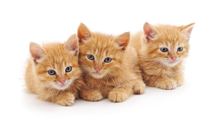 Three brown kittens.