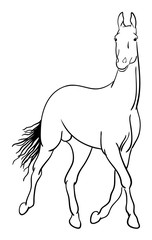 Horse line art 01. Good use for symbol, logo, web icon, mascot, sign, or any design you want.