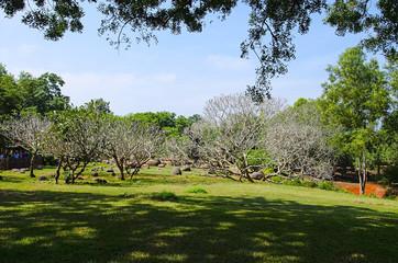 Landscape design at Auroville, City of Dawn, Pondicherry, Tamil Nadu, India