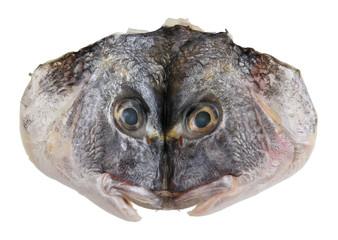 Cut and flattened head of Dorado sea fish.