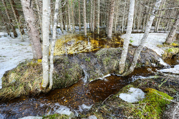 Spring flood in the wild forest, with the trees standing and reflecting in the water. Melting snow and ice on the swamp. Spring in Norway.