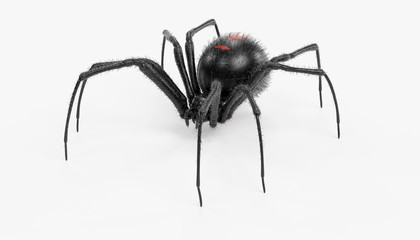 Realistic 3D Render of Black Widow Spider