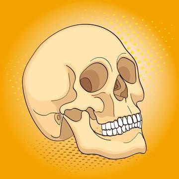 Pop art medical objects human skull. Comic book style imitation