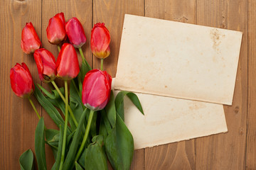 tulips are on wooden boards, old blank paper sheet with place for text - holiday and greeting concept