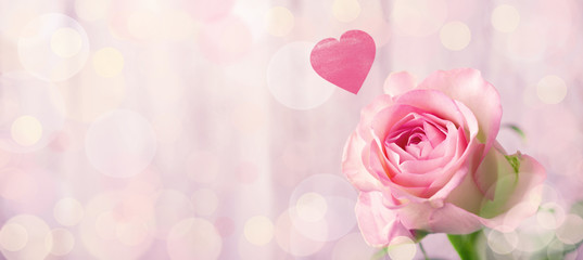 Foto auf Leinwand Roses Romantic rose flower background with heart