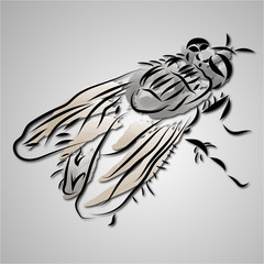 Simple Fly Black Stroke Insect Illustration