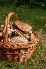Porcini mushrooms (Boletus edulis, cep, penny bun, porcino or king bolete) in the wicker basket on natural background..
