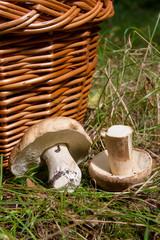 Several Porcini mushrooms (Boletus edulis, cep, penny bun, porcino or king bolete) and wicker basket on natural background..