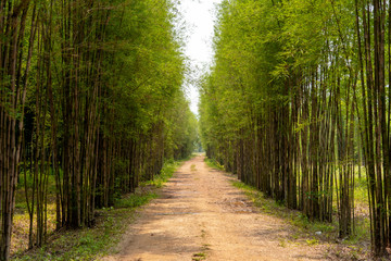 The road with the bamboo along the way