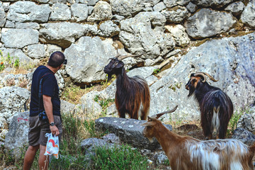 A man takes pictures of wild goats in the mountains